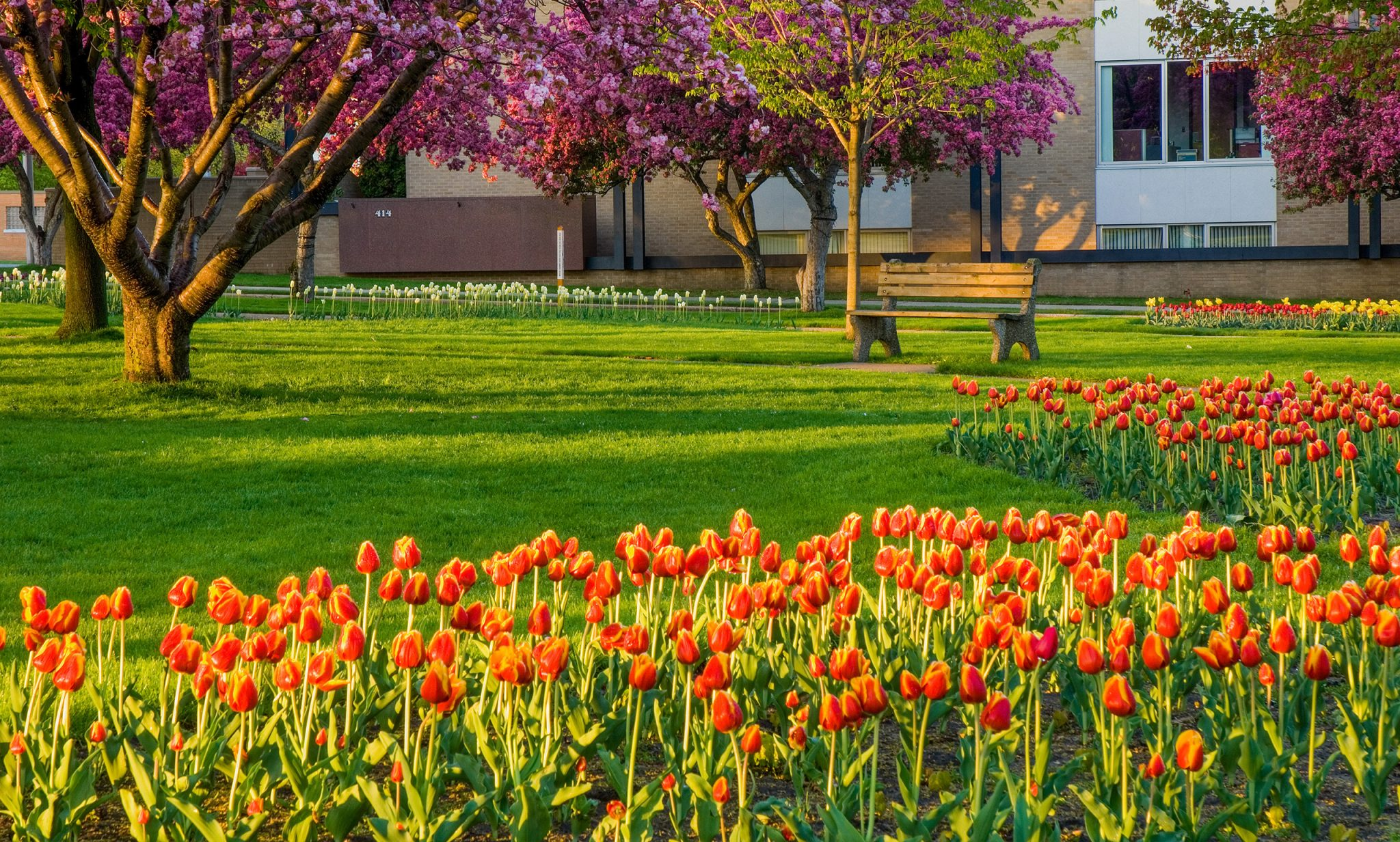 Central Park Tulips - Grand Haven, Michigan