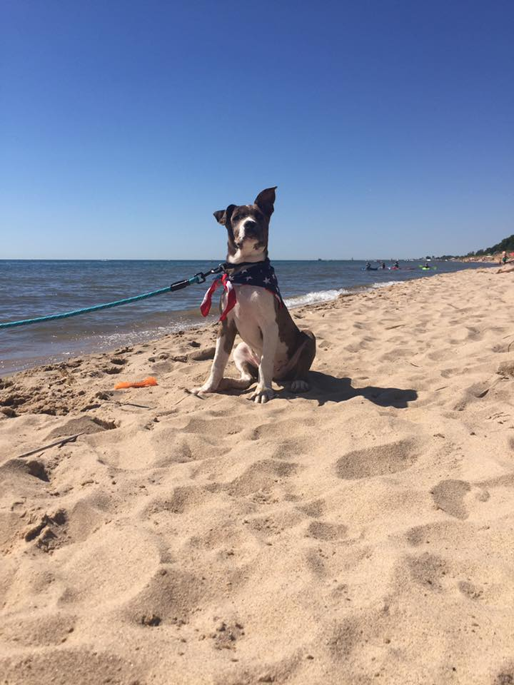 Dogs of Grand Haven - Photo: Gabe Poulin