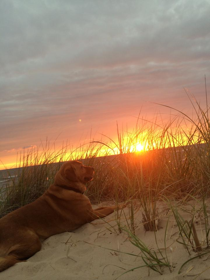 Dogs of Grand Haven - Photo:  Jill Split