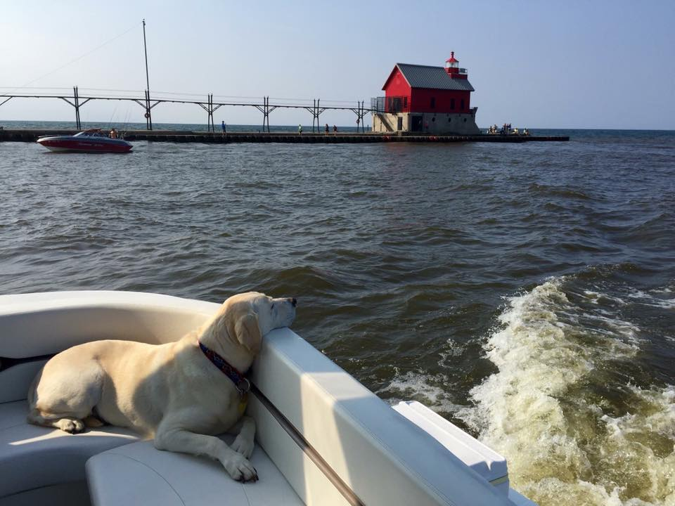 Dogs of Grand Haven - Photo: Lori Casper-Reuben