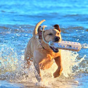 Dog Friendly Things to Do in the Grand Haven Area. Photo: Tototoo Photo