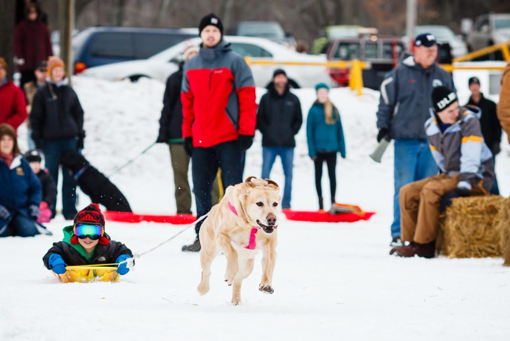 Grand Haven Winterfest Dog Pull - Photo: Randy Riksen Photography
