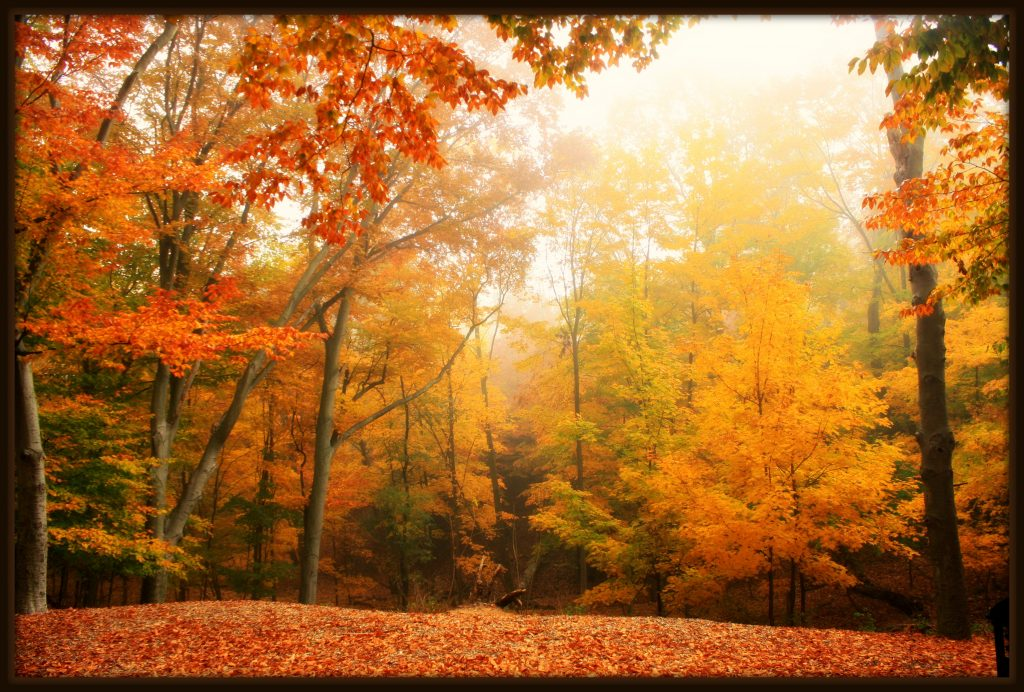 rebecca rotzell - Fall in the Grand Haven area